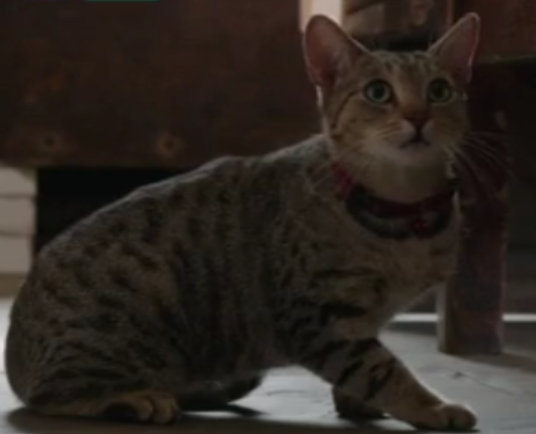 File:Tabby different.png