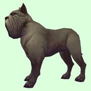 Mastiffdog gray