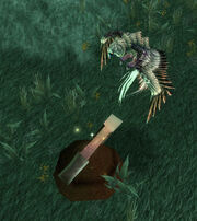 Sparrowhawk Finds Relic