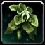 Inv misc herb tornsilkweed.png