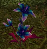 Corrupted Songflower