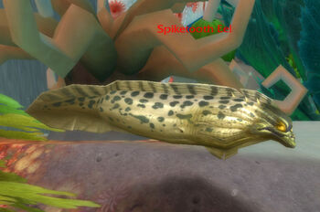 Spiketooth Eel
