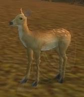 Image of Mule Deer