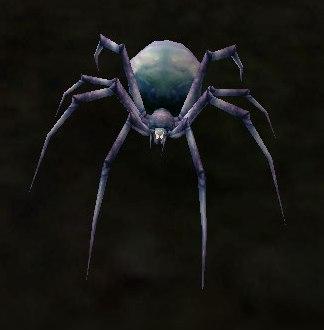 Image of Ash Spiderling