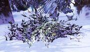 Frostberry Bush