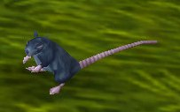 Image of Stormwind Rat