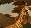 Wandering Barrens Giraffe