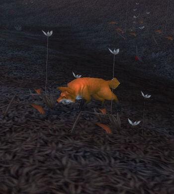 Blackwald Fox