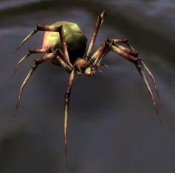 Image of Dusk Spiderling