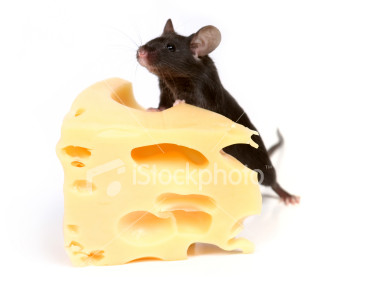 Ist2 2345751-mouse-and-cheese