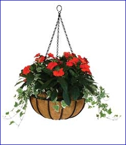 Hangingbask