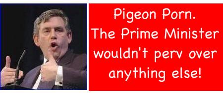 Pigeonpm