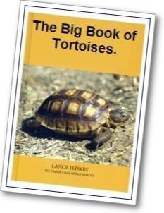 Big book tort