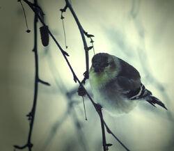 Bird by xcapnXnelehx
