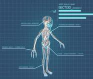 XComEU Sectoid anatomy
