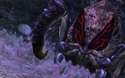 Arachno Queen