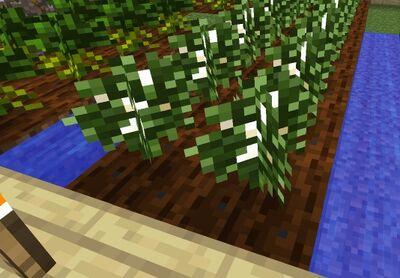 Pics 04 crop