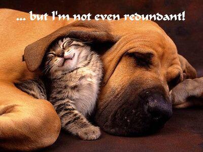 Redundadogcat from image 012