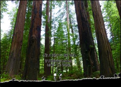 M1526 redwood