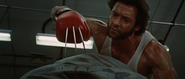 Adamantium Claws through Boxing Gloves