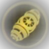 File:Bomb Icon-1.png