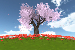 Cherry march15.png