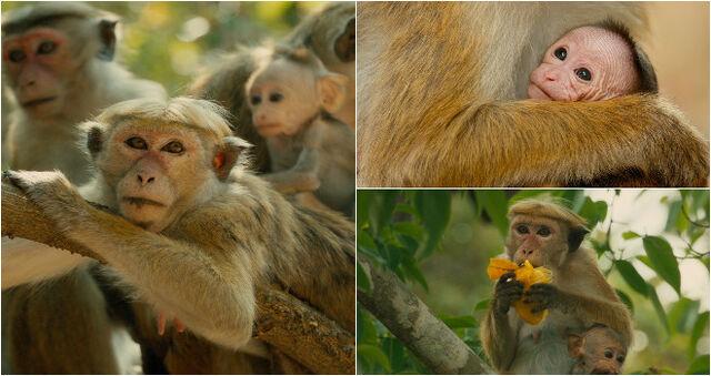 File:Monkey-kingdom-trailer.jpg