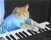 File:Keyboard Cat.jpg