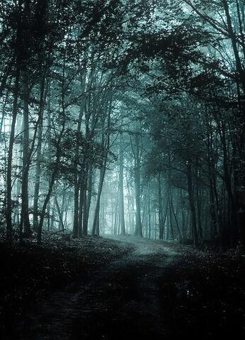 File:Cold Forest.jpg