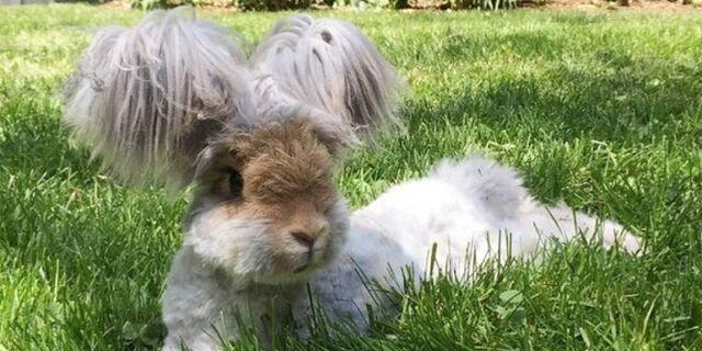 File:My dream bunny.jpg