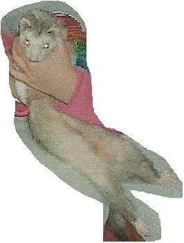File:My ferret.jpg