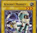 Acrobat Monkey