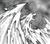 PhoenixBattleWings-EN-Manga-5D-CA.png