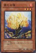 BurningAlgae-EE2-JP-C