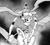Number23LancelotDarkKnightoftheUnderworld-EN-Manga-ZX-CA.png