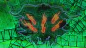NumberC96DarkStorm-JP-Anime-ZX-Sealed