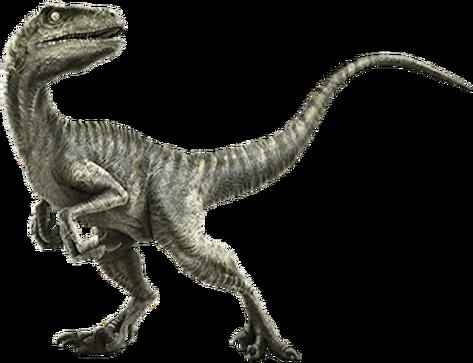 File:Charlie (Velociraptor).png