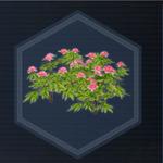 Plant 24
