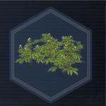 Plant 23