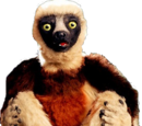 Zoboomafoo (character)