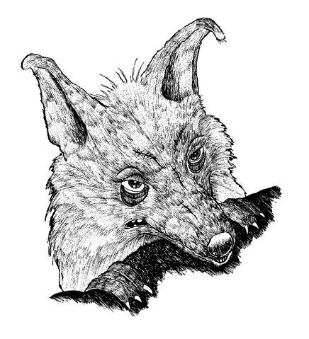 File:Colophonius Regenschein 02.jpg