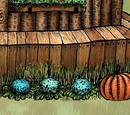 Blauer Blumenkohl