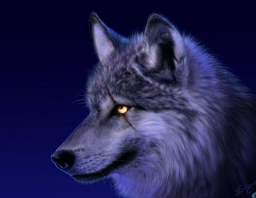 Bardulfwolf
