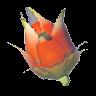 File:Volfruit.png