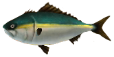 File:Majora's Mask 3D Fish Ambrosial Amberjack (Ocean Fishing Hole).png