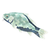 File:Breath of the Wild Frozen Fish Frozen Carp (Icon).png