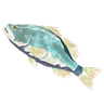 File:Breath of the Wild Frozen Fish (Bass) Frozen Hearty Bass (Icon).png