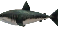 Savage Shark