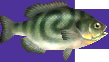 File:Twilight Princess Fish Greengill (Render).png