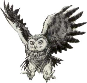 File:Owl Artwork 1 (Link's Awakening).png